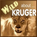 Wild About Kruger
